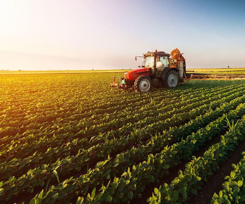 الصورة لفئة المشاريع الزراعية